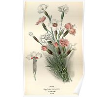 Favourite flowers of garden and greenhouse Edward Step 1896 1897 Volume 1 0123 Pink Poster