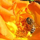 Bee ~ Stopping to smell the Rose by Kimberly Chadwick