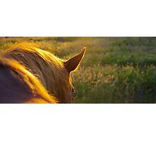 Living sunlight Photographic Print