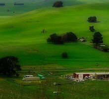 A Church, A Winery, A House, A Hill and A Few Cows by Cathy  Walker