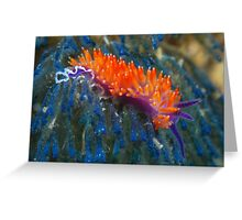 Flabellina nudibranch Greeting Card
