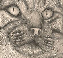 Tabby Face by kimberlymaustin