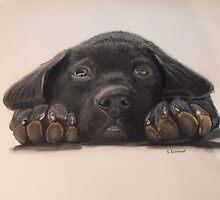 Puppy Love by Sharlene  Schmidt