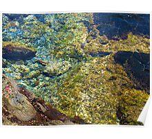 Tidal Pool Poster