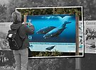 Shooting whales by awefaul
