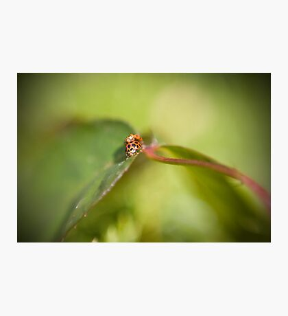 Lady love on green... Photographic Print
