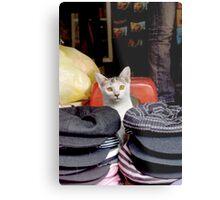 Kitten Selling Berets Metal Print