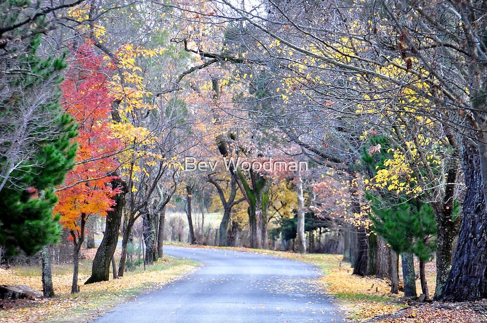 Way Down Beyer's Avenue - Hill End NSW Australia by Bev Woodman