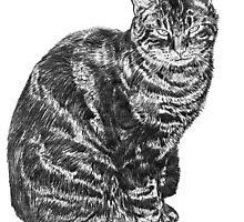 Tabby Cat by Antony R James
