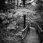 Fall Walkway by Theodore Black