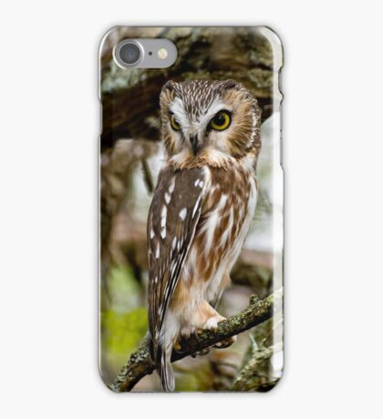 Northern Saw Whet Owl - Amherst  Island, Ontario iPhone Case/Skin