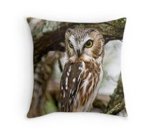 Northern Saw Whet Owl - Amherst  Island, Ontario Throw Pillow