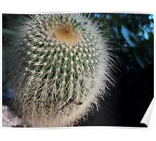 Spiky Little Cactus Poster
