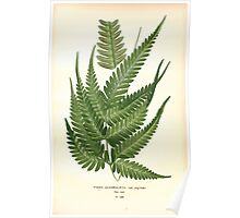 Favourite flowers of garden and greenhouse Edward Step 1896 1897 Volume 4 0315 Pteris Quadriaurita Poster