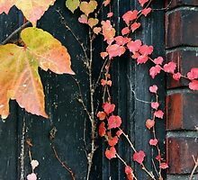 Rustic Autumn Vines Against An Old Building 3 by Jamie Wogan Edwards