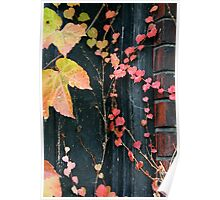 Rustic Autumn Vines Against An Old Building 3 Poster