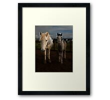 Eriskay mare and foal Framed Print