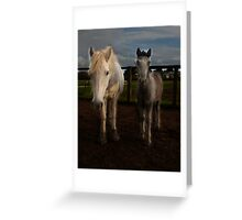 Eriskay mare and foal Greeting Card