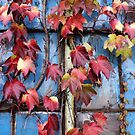 Rustic Autumn Vines Against An Old Building 4 by Jamie Wogan Edwards