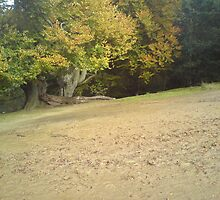 tree drop by ryan47901