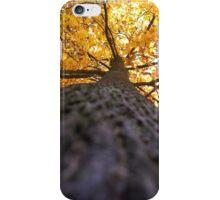 Autumn Below iPhone Case/Skin