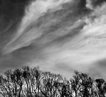 Just Love A Whispy Cloud by Philip Marschke