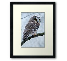 Northern Saw Whet Owl Branch Framed Print