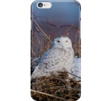 Snowy Owl on Hill Top - Amherst Island, Ontario iPhone Case/Skin
