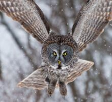 Great Gray Owl Sticker