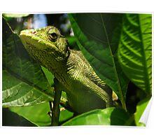 Reptile, close encounter Poster