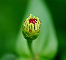 New Born Flower by aditya sakha  kusuma