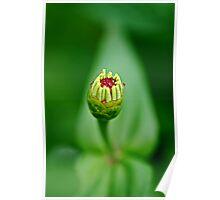 New Born Flower Poster