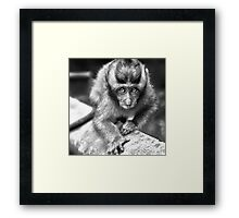 Face To Face - I know you are staring at me Framed Print