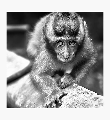 Face To Face - I know you are staring at me Photographic Print