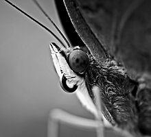 Butterfly by aditya sakha  kusuma
