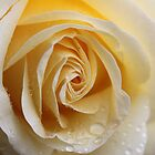 yellow rose by Jean O'Callaghan