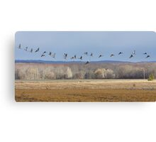 Streaming Cranes Canvas Print