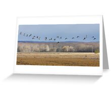 Streaming Cranes Greeting Card