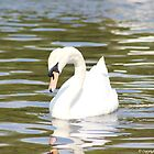 Graceful Swan The Mill Road. by Jean O&#x27;Callaghan