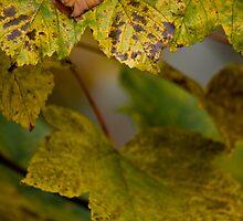 Autumnal by Philip Bateman