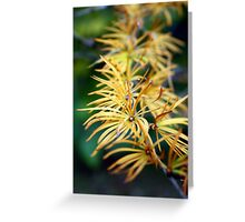 Golden pine needles Greeting Card