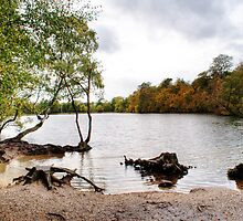 Black Park Lakeside 2 by Chris Day