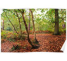 Autumn in the Enchanted Forest Poster