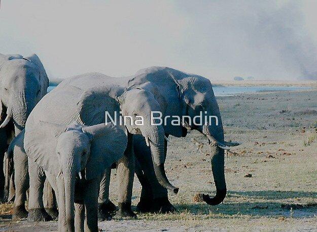 Elephants with Natural Brush Fire in the Background -Okavango Delta, Botswana by Nina Brandin