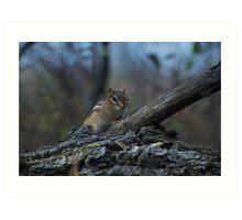 woodland critter Art Print