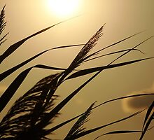 Grass In Silhouette by Debbie Oppermann
