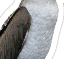 Blue-Footed Booby - Galapagos Sticker