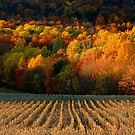 September Grass by photosbytony
