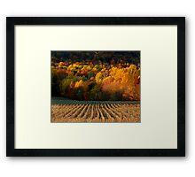 September Grass Framed Print