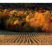 September Grass Photographic Print